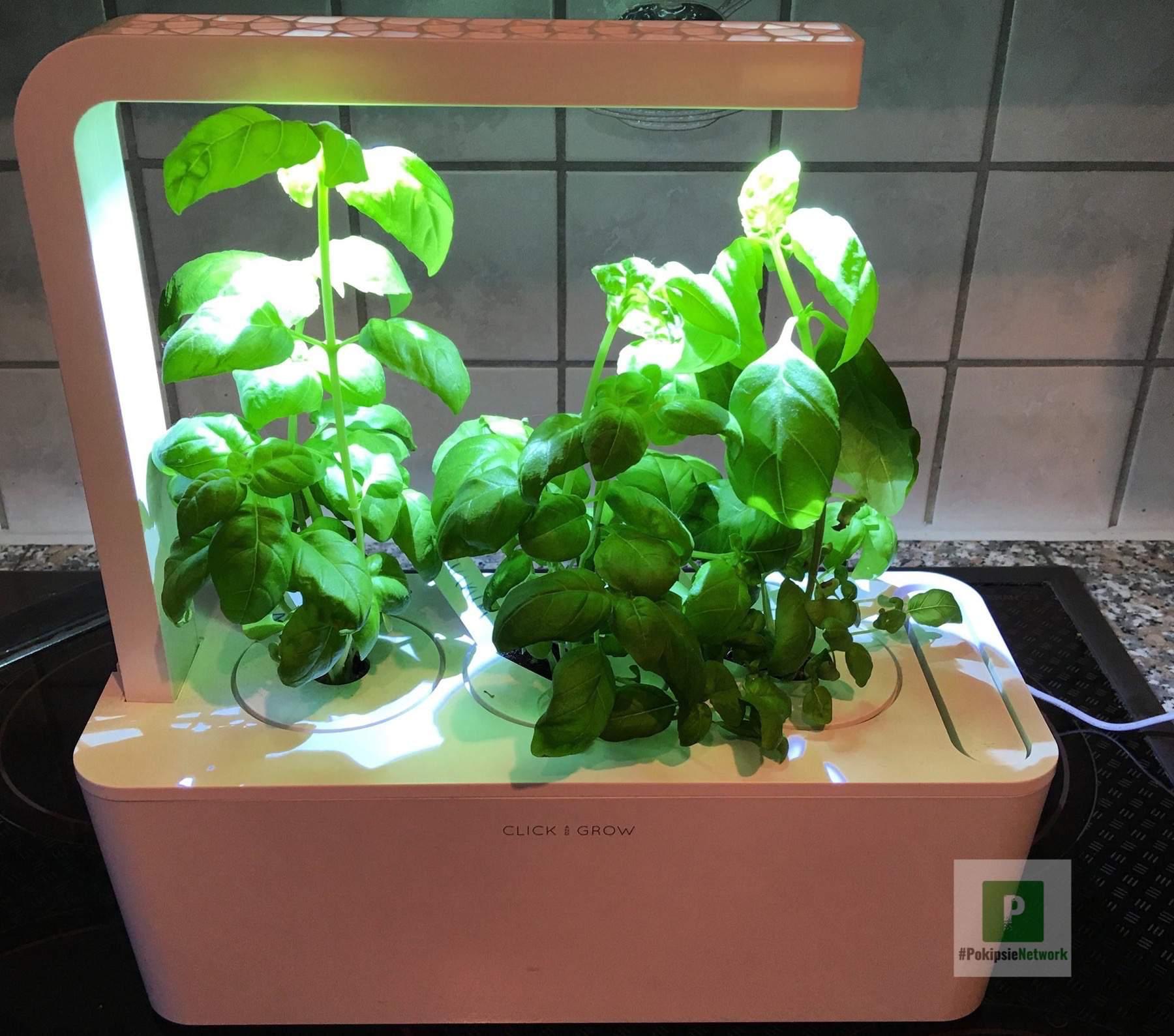 Click and Grow kleiner Kräuter Garten für zu Hause